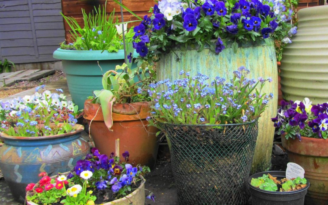 Containing your excitement: Container garden tips